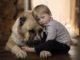Алабай и ребенок